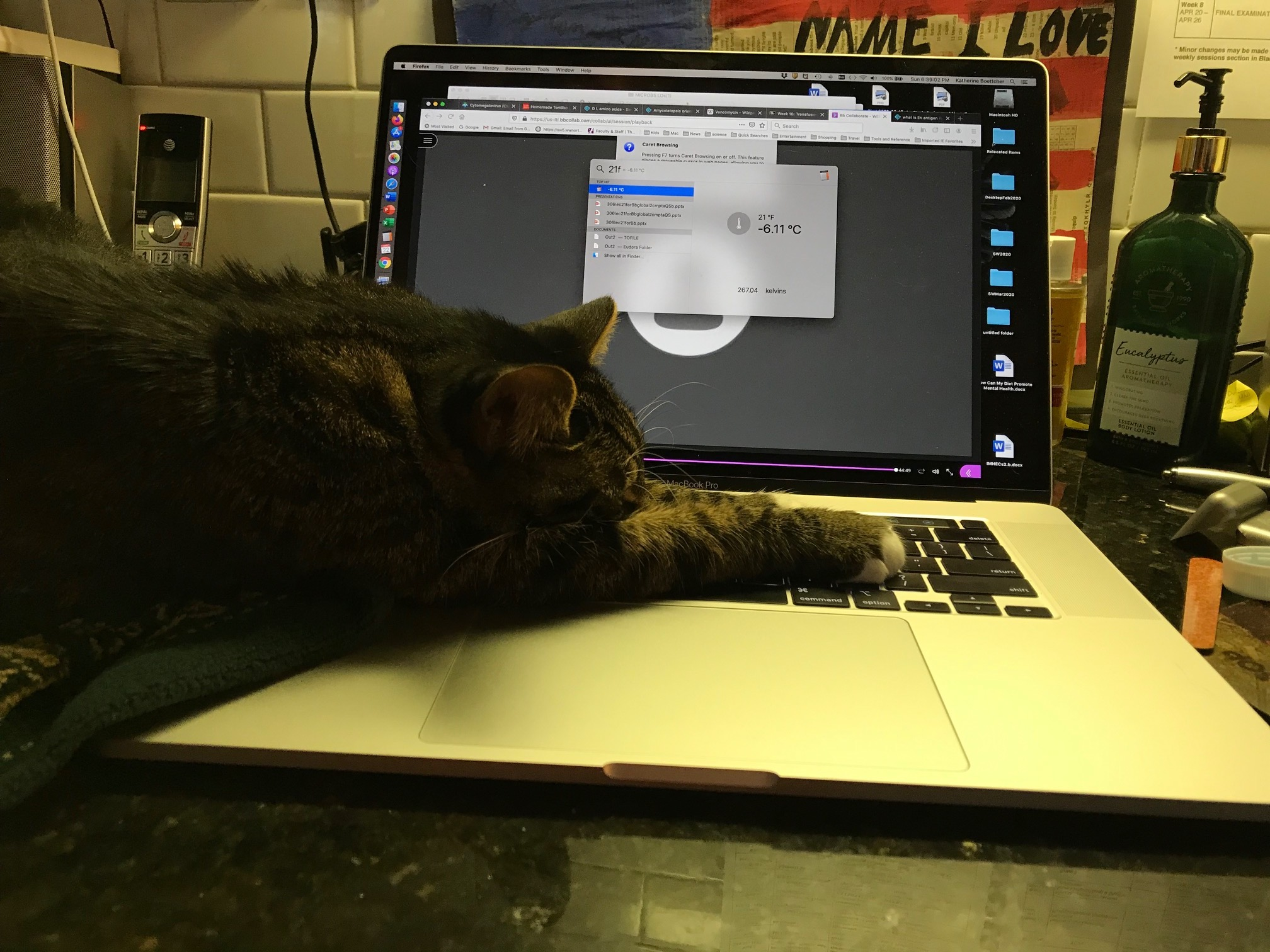 cat lounging on computer keyboard
